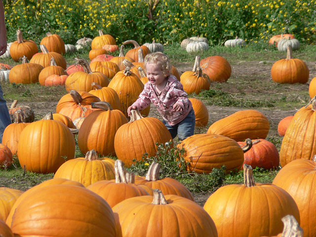 pumpkin patches